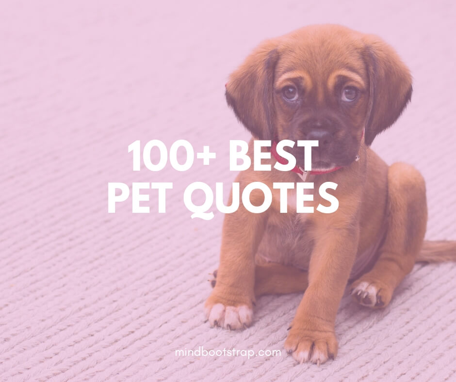 Inspirational Pet Quotes And Sayings