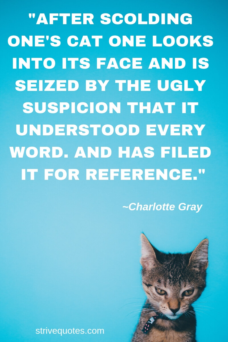 Quotes About Pet Cats